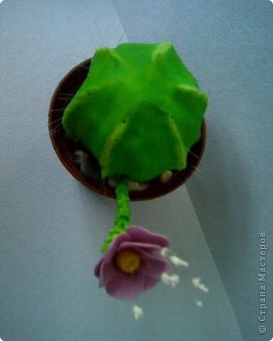кактус фото 3