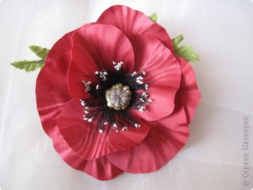 самый первый мой цветок - мак фото 1