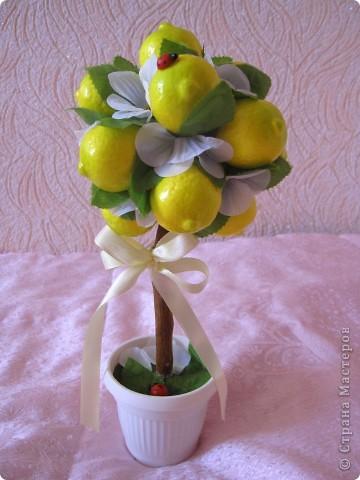 лимонное дерево фото 1