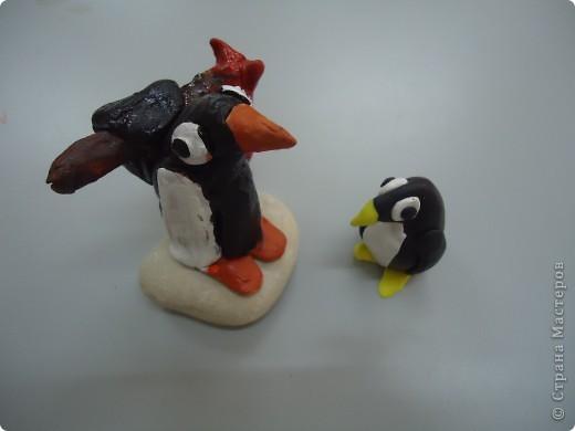 Пингвинята фото 1