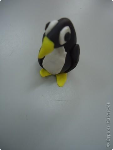 Пингвинята фото 4