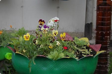 вот такая красота у нас выросла во дворе,очень радует что люди стремятся облагородить свои дворы. фото 3