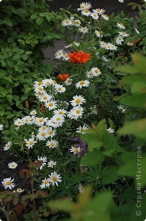 вот такая красота у нас выросла во дворе,очень радует что люди стремятся облагородить свои дворы. фото 5