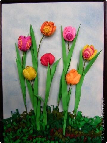 Тюльпаны расцвели.