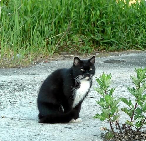 МК ПО ВАЛЯНИЮ котёнка (часть 2) фото 1
