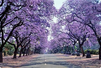 Напоследок решила сделать деревья с такими экзотическими названиями))  фото 8