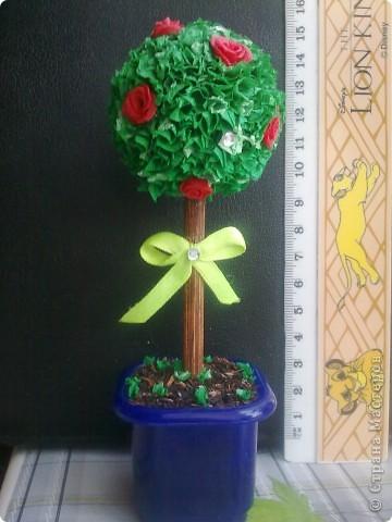 Дерево не первое, но милое! :)))