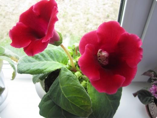 такие цветы я выращиваю дома фото 1