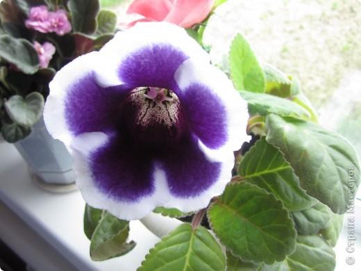 такие цветы я выращиваю дома фото 2