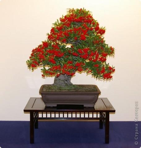 Напоследок решила сделать деревья с такими экзотическими названиями))  фото 4