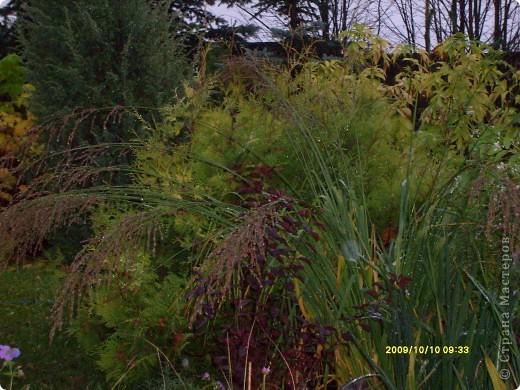 Приглашаю на прогулку по Соликамскому дендропарку......фотографии сняты в 2009 году, осенью.......  из истории :  самый первый Ботанически парк  на Руси  был основан в Соликамске   Г.А. Демидовым...... в нем насчитывалось более 1000 экземпляров........ фото 2