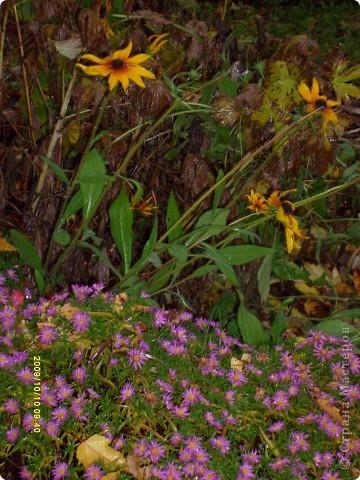 Приглашаю на прогулку по Соликамскому дендропарку......фотографии сняты в 2009 году, осенью.......  из истории :  самый первый Ботанически парк  на Руси  был основан в Соликамске   Г.А. Демидовым...... в нем насчитывалось более 1000 экземпляров........ фото 12