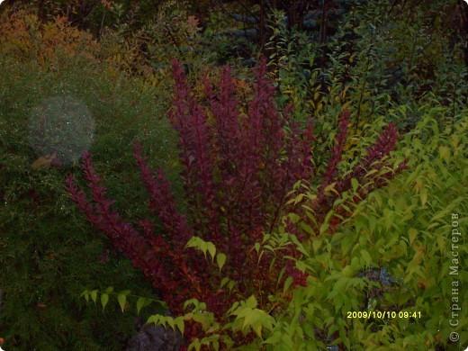 Приглашаю на прогулку по Соликамскому дендропарку......фотографии сняты в 2009 году, осенью.......  из истории :  самый первый Ботанически парк  на Руси  был основан в Соликамске   Г.А. Демидовым...... в нем насчитывалось более 1000 экземпляров........ фото 13