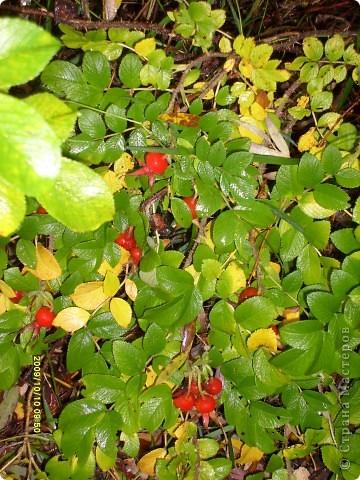 Приглашаю на прогулку по Соликамскому дендропарку......фотографии сняты в 2009 году, осенью.......  из истории :  самый первый Ботанически парк  на Руси  был основан в Соликамске   Г.А. Демидовым...... в нем насчитывалось более 1000 экземпляров........ фото 18