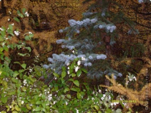 Приглашаю на прогулку по Соликамскому дендропарку......фотографии сняты в 2009 году, осенью.......  из истории :  самый первый Ботанически парк  на Руси  был основан в Соликамске   Г.А. Демидовым...... в нем насчитывалось более 1000 экземпляров........ фото 19