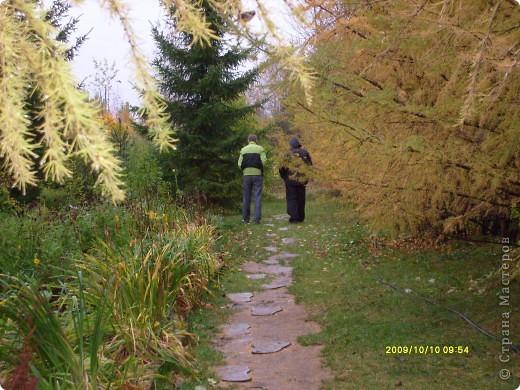 Приглашаю на прогулку по Соликамскому дендропарку......фотографии сняты в 2009 году, осенью.......  из истории :  самый первый Ботанически парк  на Руси  был основан в Соликамске   Г.А. Демидовым...... в нем насчитывалось более 1000 экземпляров........ фото 20