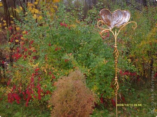 Приглашаю на прогулку по Соликамскому дендропарку......фотографии сняты в 2009 году, осенью.......  из истории :  самый первый Ботанически парк  на Руси  был основан в Соликамске   Г.А. Демидовым...... в нем насчитывалось более 1000 экземпляров........ фото 22