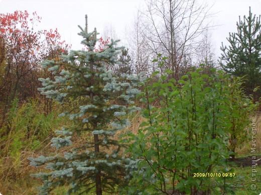 Приглашаю на прогулку по Соликамскому дендропарку......фотографии сняты в 2009 году, осенью.......  из истории :  самый первый Ботанически парк  на Руси  был основан в Соликамске   Г.А. Демидовым...... в нем насчитывалось более 1000 экземпляров........ фото 23