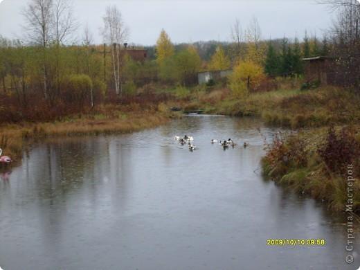 Приглашаю на прогулку по Соликамскому дендропарку......фотографии сняты в 2009 году, осенью.......  из истории :  самый первый Ботанически парк  на Руси  был основан в Соликамске   Г.А. Демидовым...... в нем насчитывалось более 1000 экземпляров........ фото 24