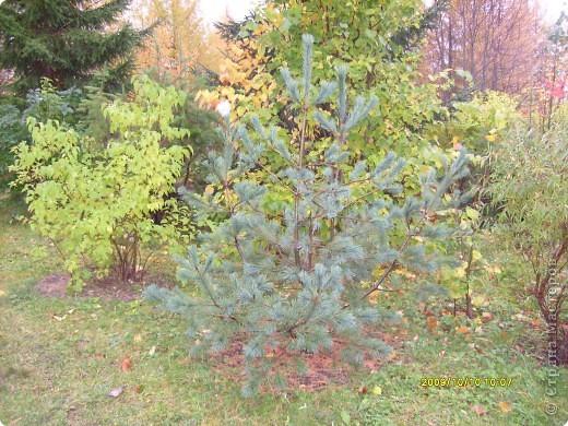 Приглашаю на прогулку по Соликамскому дендропарку......фотографии сняты в 2009 году, осенью.......  из истории :  самый первый Ботанически парк  на Руси  был основан в Соликамске   Г.А. Демидовым...... в нем насчитывалось более 1000 экземпляров........ фото 25