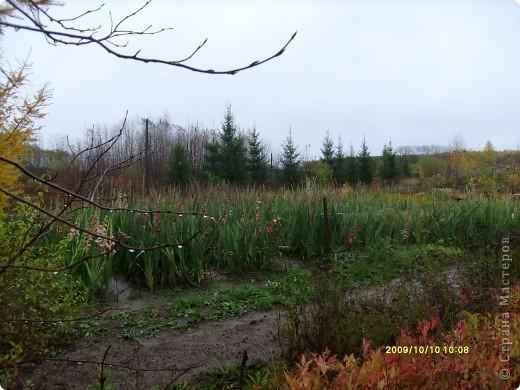 Приглашаю на прогулку по Соликамскому дендропарку......фотографии сняты в 2009 году, осенью.......  из истории :  самый первый Ботанически парк  на Руси  был основан в Соликамске   Г.А. Демидовым...... в нем насчитывалось более 1000 экземпляров........ фото 26