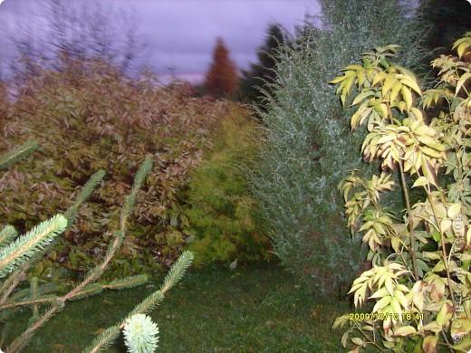 Приглашаю на прогулку по Соликамскому дендропарку......фотографии сняты в 2009 году, осенью.......  из истории :  самый первый Ботанически парк  на Руси  был основан в Соликамске   Г.А. Демидовым...... в нем насчитывалось более 1000 экземпляров........ фото 29