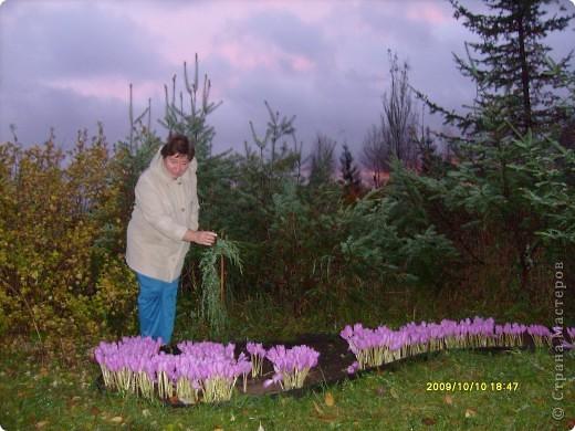 Приглашаю на прогулку по Соликамскому дендропарку......фотографии сняты в 2009 году, осенью.......  из истории :  самый первый Ботанически парк  на Руси  был основан в Соликамске   Г.А. Демидовым...... в нем насчитывалось более 1000 экземпляров........ фото 30
