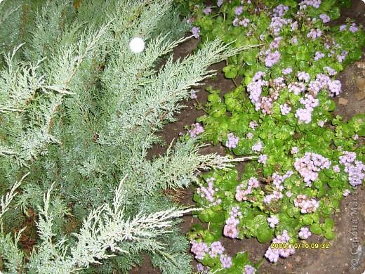 Приглашаю на прогулку по Соликамскому дендропарку......фотографии сняты в 2009 году, осенью.......  из истории :  самый первый Ботанически парк  на Руси  был основан в Соликамске   Г.А. Демидовым...... в нем насчитывалось более 1000 экземпляров........ фото 4