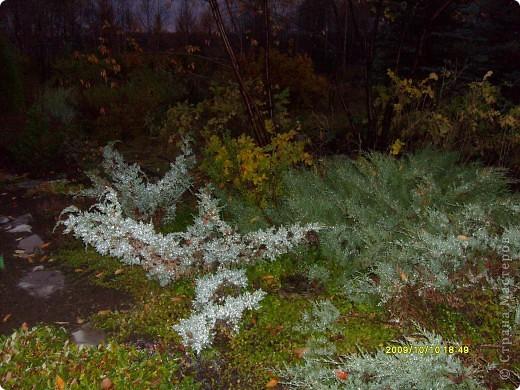 Приглашаю на прогулку по Соликамскому дендропарку......фотографии сняты в 2009 году, осенью.......  из истории :  самый первый Ботанически парк  на Руси  был основан в Соликамске   Г.А. Демидовым...... в нем насчитывалось более 1000 экземпляров........ фото 31
