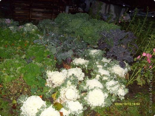 Приглашаю на прогулку по Соликамскому дендропарку......фотографии сняты в 2009 году, осенью.......  из истории :  самый первый Ботанически парк  на Руси  был основан в Соликамске   Г.А. Демидовым...... в нем насчитывалось более 1000 экземпляров........ фото 34