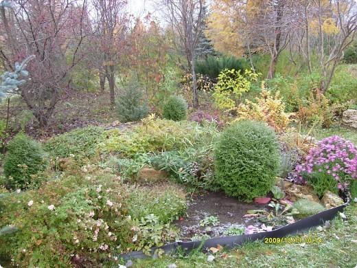 Приглашаю на прогулку по Соликамскому дендропарку......фотографии сняты в 2009 году, осенью.......  из истории :  самый первый Ботанически парк  на Руси  был основан в Соликамске   Г.А. Демидовым...... в нем насчитывалось более 1000 экземпляров........ фото 35