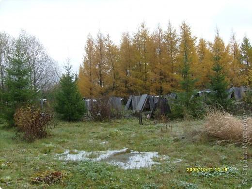 Приглашаю на прогулку по Соликамскому дендропарку......фотографии сняты в 2009 году, осенью.......  из истории :  самый первый Ботанически парк  на Руси  был основан в Соликамске   Г.А. Демидовым...... в нем насчитывалось более 1000 экземпляров........ фото 37