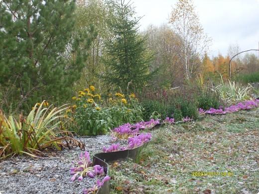 Приглашаю на прогулку по Соликамскому дендропарку......фотографии сняты в 2009 году, осенью.......  из истории :  самый первый Ботанически парк  на Руси  был основан в Соликамске   Г.А. Демидовым...... в нем насчитывалось более 1000 экземпляров........ фото 38