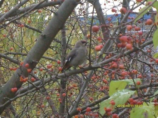 Приглашаю на прогулку по Соликамскому дендропарку......фотографии сняты в 2009 году, осенью.......  из истории :  самый первый Ботанически парк  на Руси  был основан в Соликамске   Г.А. Демидовым...... в нем насчитывалось более 1000 экземпляров........ фото 40