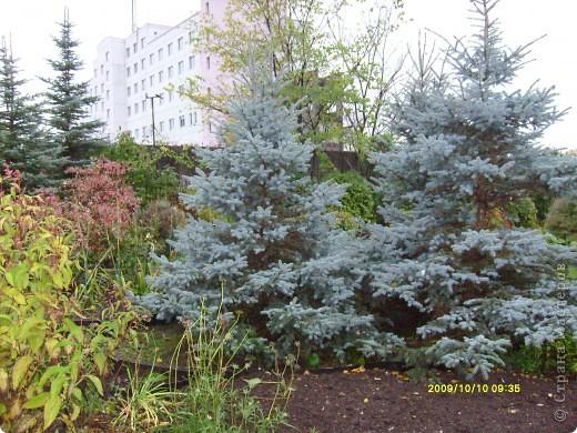 Приглашаю на прогулку по Соликамскому дендропарку......фотографии сняты в 2009 году, осенью.......  из истории :  самый первый Ботанически парк  на Руси  был основан в Соликамске   Г.А. Демидовым...... в нем насчитывалось более 1000 экземпляров........ фото 5