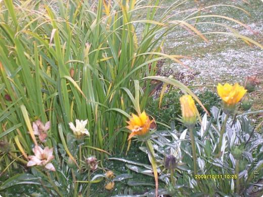 Приглашаю на прогулку по Соликамскому дендропарку......фотографии сняты в 2009 году, осенью.......  из истории :  самый первый Ботанически парк  на Руси  был основан в Соликамске   Г.А. Демидовым...... в нем насчитывалось более 1000 экземпляров........ фото 41