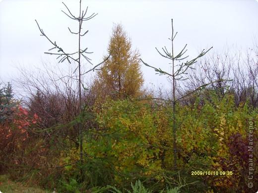 Приглашаю на прогулку по Соликамскому дендропарку......фотографии сняты в 2009 году, осенью.......  из истории :  самый первый Ботанически парк  на Руси  был основан в Соликамске   Г.А. Демидовым...... в нем насчитывалось более 1000 экземпляров........ фото 6