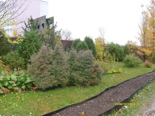 Приглашаю на прогулку по Соликамскому дендропарку......фотографии сняты в 2009 году, осенью.......  из истории :  самый первый Ботанически парк  на Руси  был основан в Соликамске   Г.А. Демидовым...... в нем насчитывалось более 1000 экземпляров........ фото 7