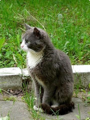 МК ПО ВАЛЯНИЮ котёнка (часть 3) фото 1