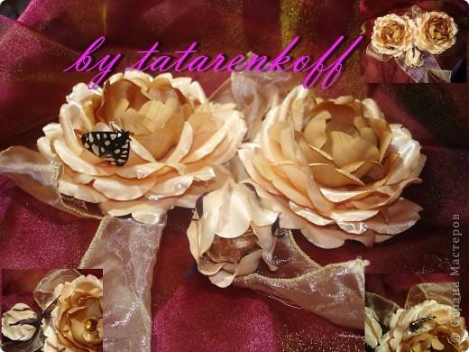 роза Николь фото 5