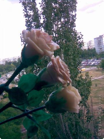 Всем мастерицам привет!!!Вот и закончила я лепить свои розы,мне очень хотелось чтобы они получились больше,чем первые.Это мне удалось,но только все три розы получились разные))) фото 2