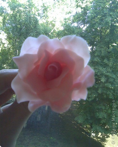 собственно розы,как розы,сюрприз ниже фото 2