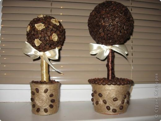 Кофейные деревья фото 1