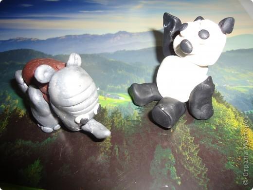 Носорог и панда фото 1