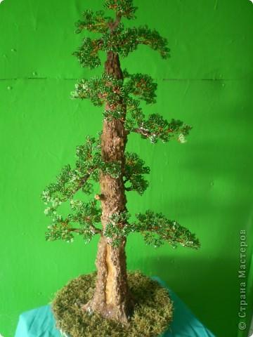 Моё первое дерево фото 7