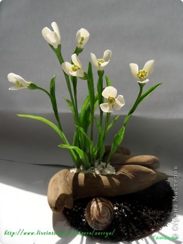 И опять весна). Подснежники. фото 1