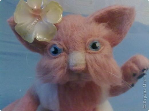 кошка Маха фото 3