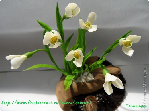 И опять весна). Подснежники. фото 2