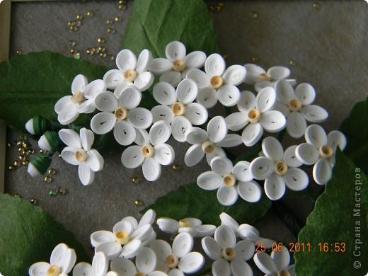 На дворе конец июня, цветут жасмин, пионы, розы... . А у меня все не отцветает черемуха. Долго билась над этой работой. Цветочки мелкие, лепестки из полосок 1 мм, да еще и по размеру малипусенькие. Сначала не хотели собираться в цветок, затем в соцветие, но я их всетаки домучила. В результате появилась вот такая веточка. Что скажите? Похожа или нет? фото 3