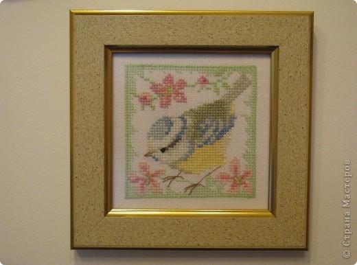 Птички - синички фото 3
